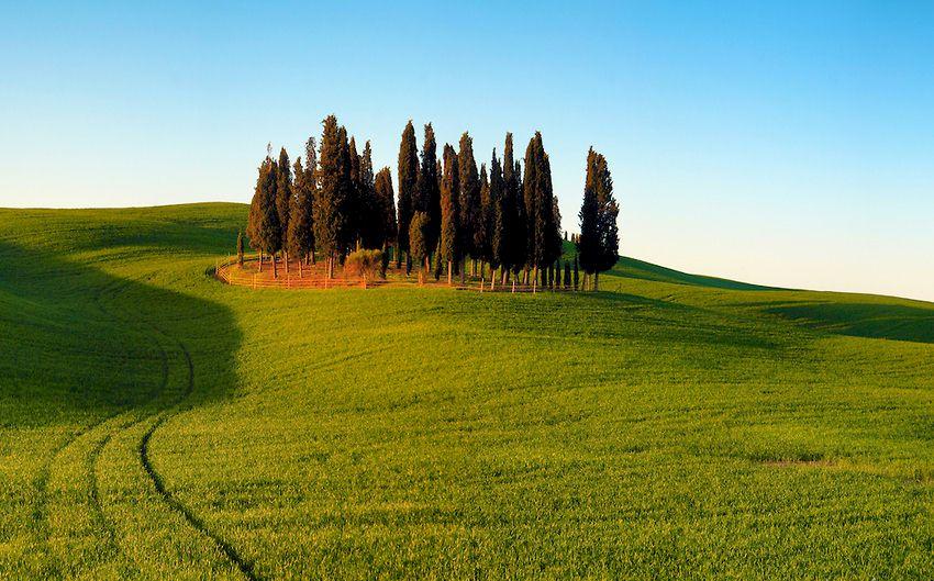 cypress_trees_valdorcia.jpg