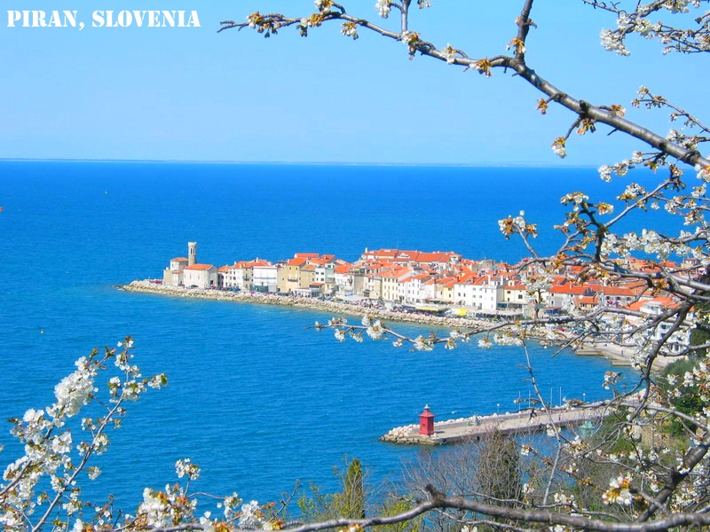 piran-with-cherry blossom