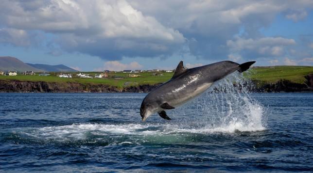 dolphine.jpg